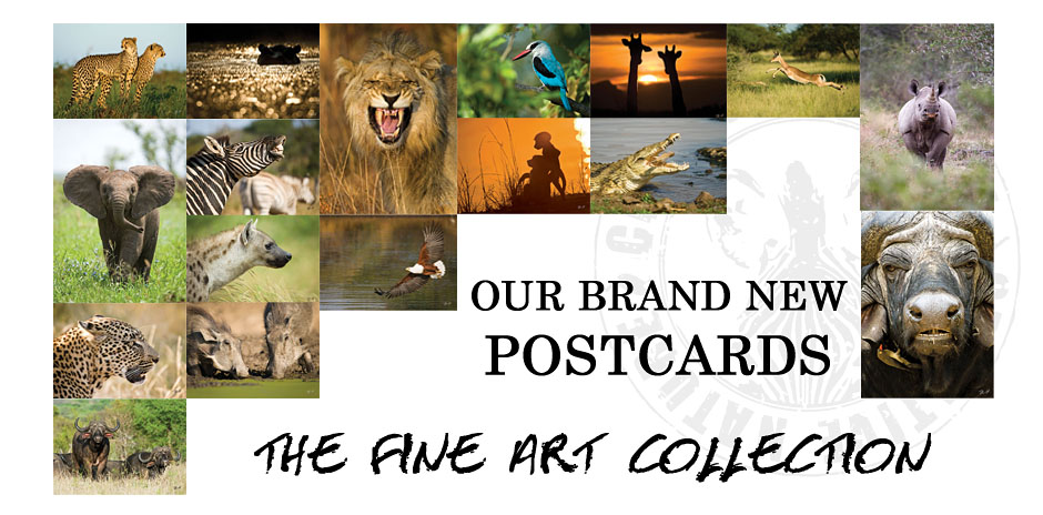 Creative Nature Postcards