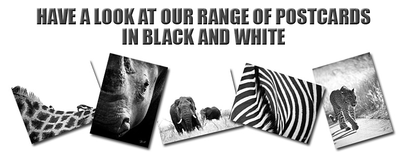 Postcards - Nature in Black and White